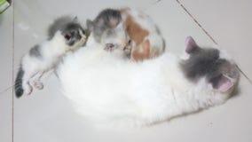 The kitten is lying. Footage taken on 2015 stock video
