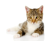 Kitten lying in front.  on white background Stock Images