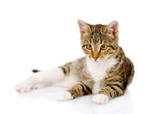 Kitten lying in front.  on white background Royalty Free Stock Image
