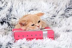 Kitten lying on a gift box Stock Images