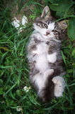 Kitten lying on the grass in the back. Top view of a cute awake kitten lying on the grass in the back. Nearby lies a white stone-like heart stock photos