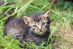 Kitten lying on the grass Royalty Free Stock Photo