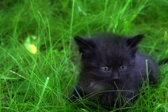 Kitten lying in the grass. stock photography