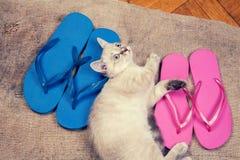 Kitten lying near flip flops sandals Royalty Free Stock Photo