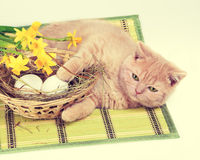 Kitten lying near nest with eggs. Cute red kitten lying near nest with eggs Stock Images