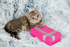 Kitten lying on the pink present box Royalty Free Stock Images