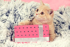 Kitten lying on the present box Royalty Free Stock Image