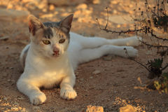The kitten is lying in the shadows on the sand. Young street cat resting in the shade on the sand Royalty Free Stock Images