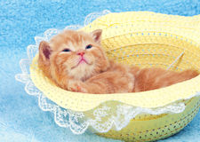 Kitten lying in the straw hat. Little cute red kitten lying on the back in the straw hat royalty free stock photo