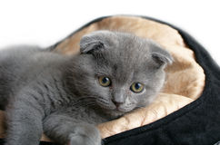 Kitten lying Royalty Free Stock Photography