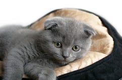 Kitten lying Royalty Free Stock Photography
