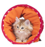 Kitten lying in a toy tunnel Stock Image