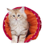 Kitten lying in a toy tunnel Stock Photo