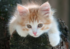 Kitten lying in a tree Stock Image