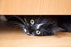 Kitten lying under drawer of wardrobe Stock Photos