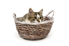 Kitten lying in a wicker basket isolated on white background Stock Photo