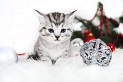 A kitten is a lynx. Striped cute kitten. Christmas, new year, fir-tree Royalty Free Stock Photos