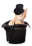 Kitten magician Royalty Free Stock Photo