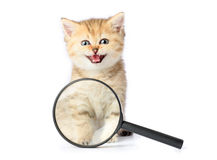 Kitten and a magnifying glass on white background. Stock Photos