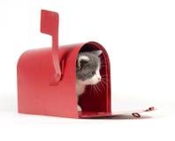 Kitten in a mailbox Stock Photo