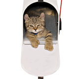 Kitten in a Mailbox royalty free stock images