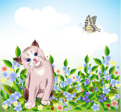 Kitten at the meadow Royalty Free Stock Photography