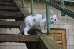 Kitten. On a metal ladder Royalty Free Stock Photography