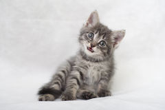 The kitten mews. Striped kitten on a light background Royalty Free Stock Images
