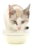 Kitten milk Royalty Free Stock Photo