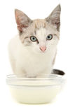 Kitten milk Stock Image