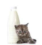 Kitten and milk bottle Stock Image