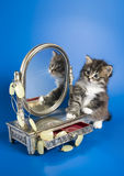 Kitten and a mirror. The kitten sits near to a casket from metal with a mirror, on a mirror of an ornament from a stone. All on a dark blue background royalty free stock photography