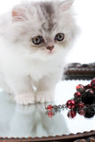 Kitten and mirror Royalty Free Stock Photography