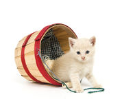 Kitten mischief Royalty Free Stock Image