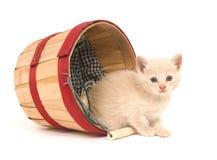 Kitten mischief Stock Photography