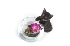 Kitten Mischief Royalty Free Stock Photo