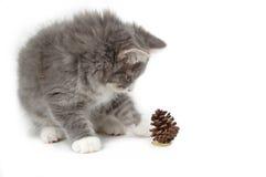 Kitten mit Weihnachtskieferkegel Lizenzfreie Stockbilder
