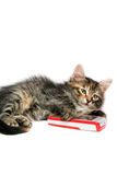 Kitten and mobile phone - isolated royalty free stock photography