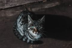 Kitten with mottled coloring on black background royalty free stock photo