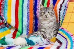 Kitten on multicolored wool blanket Royalty Free Stock Photo