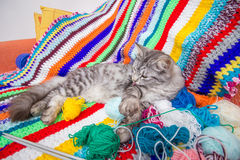 Kitten on multicolored wool blanket Stock Photography