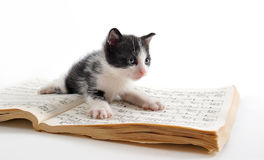 Kitten and music book Stock Photos