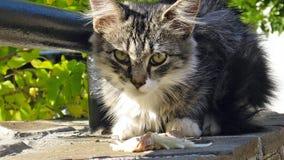 A kitten named Oscar. Breakfast homeless kitten named Oscar Stock Photo