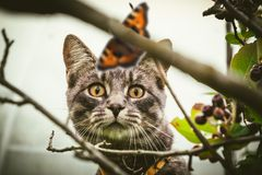 A kitten in nature hunts a butterfly. Royalty Free Stock Photography