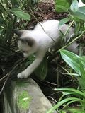 Kitten in nature Stock Images