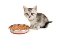 Kitten near a bowl with food  on white Stock Photos