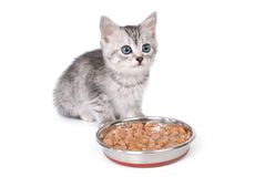 Kitten near a bowl with food on white background Royalty Free Stock Photos
