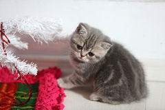 Kitten near a Christmas tree Royalty Free Stock Photography
