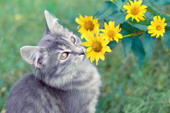 Kitten near flowers Royalty Free Stock Images
