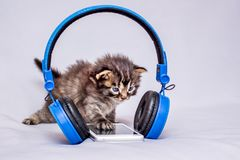 Kitten near a mobile phone and headphones. Listening to music. S royalty free stock photo